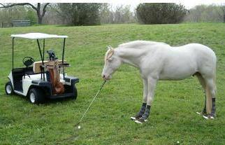 http://www.golfdisputeresolution.com/wp-content/uploads/2012/08/horse2.jpg